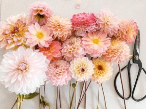 Flores Mexico