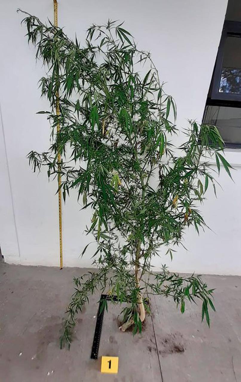 Marihuana 1
