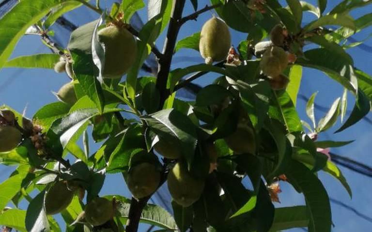 arbol fruta
