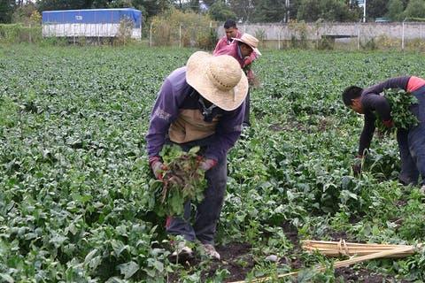 campo campesino cultivo