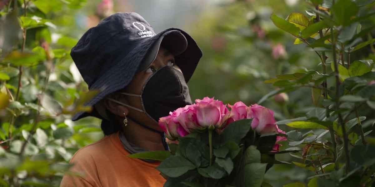 flores dia de la madre coronavitus