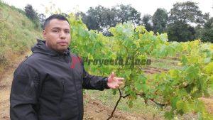 hecto uva de mesa hueyacatitla